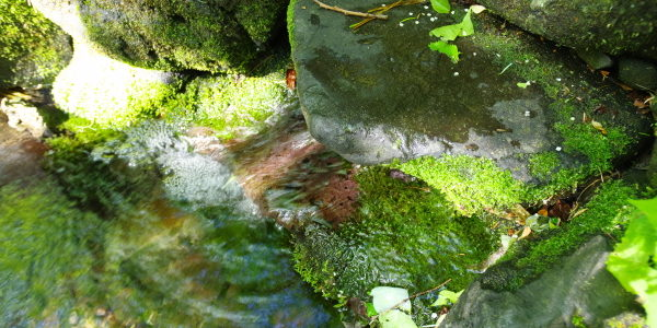 甘露泉水の湧き水